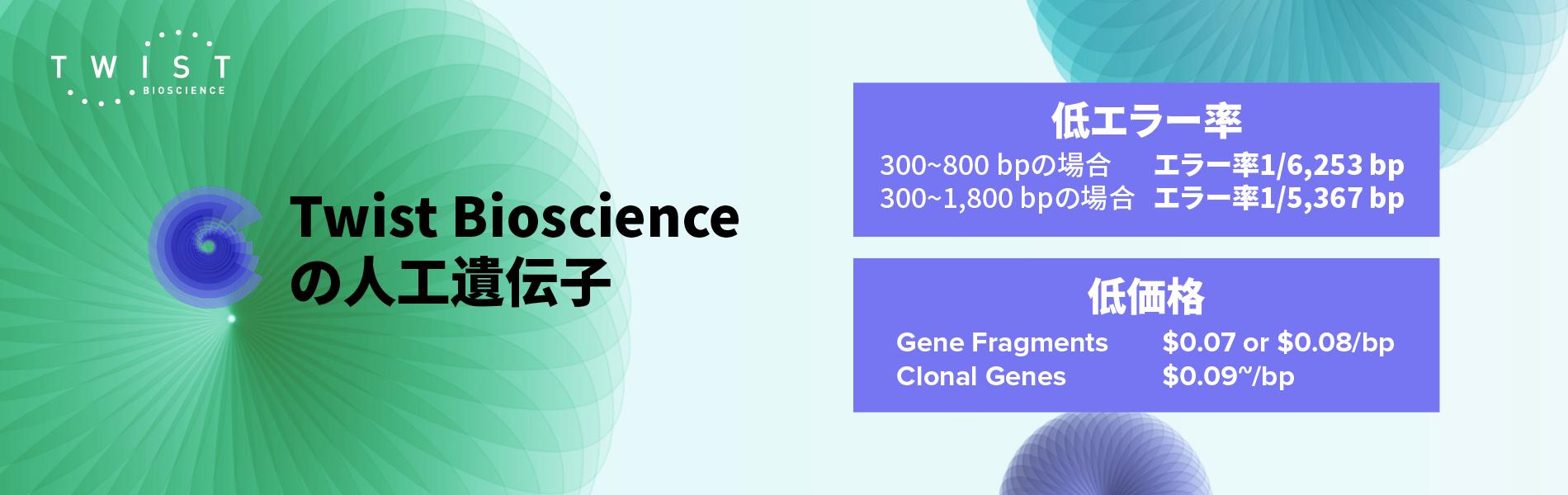 人工遺伝子、遺伝子断片、受託合成、アダプター、クローニング、グリセロールストック、エンドトキシンフリー、トランスフェクション、低いエラー率、SARS-CoV-2関連抗体