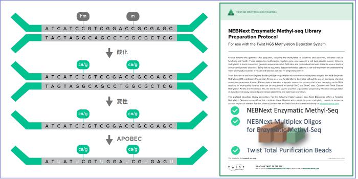 次世代シーケンサー、エクソーム、ctDNA、cfDNA、FFPE、メチレーション